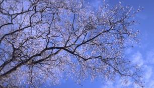 Enchevêtrement de branches au soleil ...